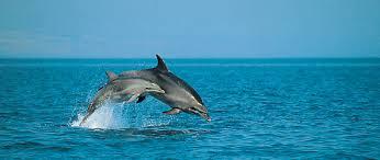 delfinok2