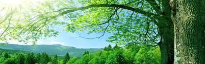 albero sole