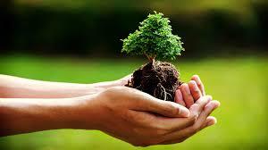 mani albero
